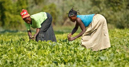 Leis prejudicam trabalho das mulheres na maior parte do mundo, diz relatório do Banco Mundial/