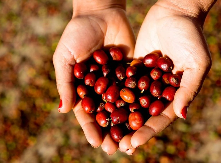 Com apoio da ONU Mulheres e da FAO, Ministério da Agricultura lança concurso para selecionar empreendimentos inovadores de Mulheres Rurais/